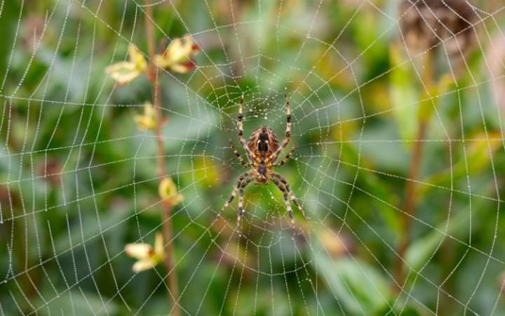 Alamy-house-spider-large